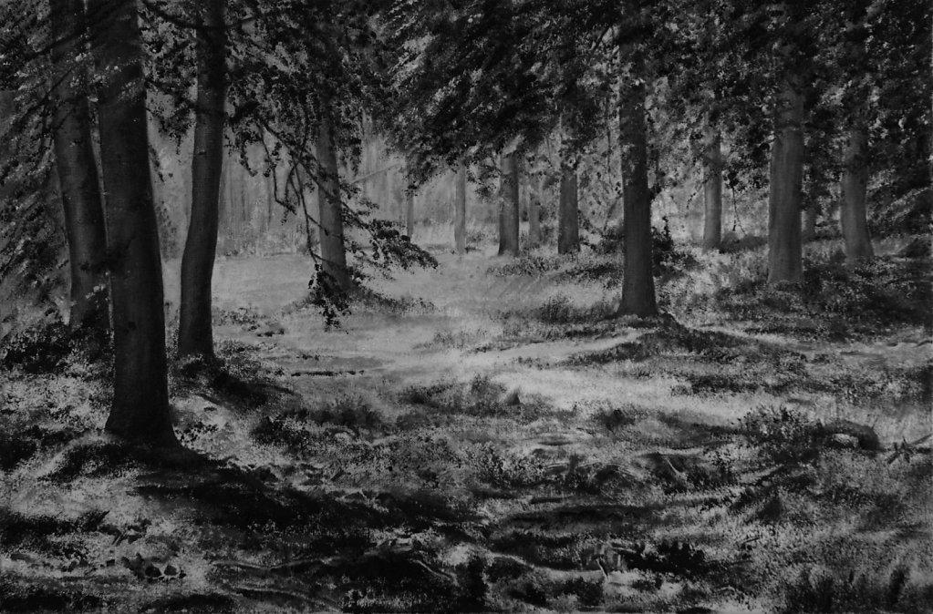 Wald mit Lichtung