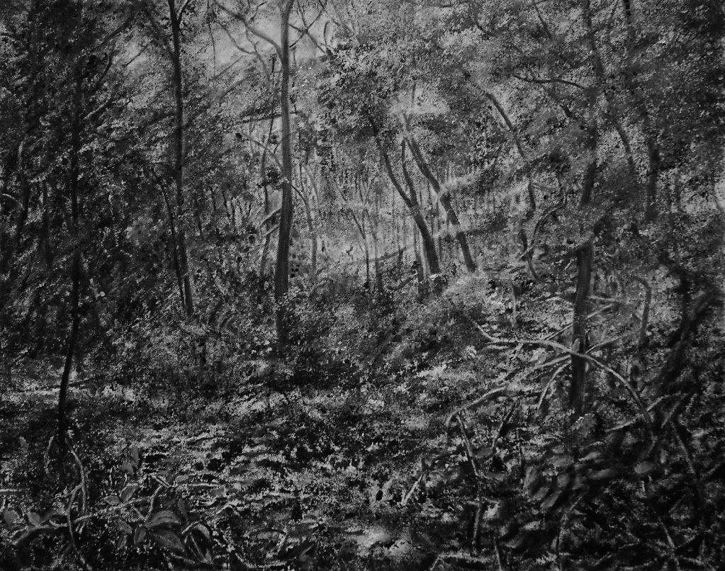 Schwarz-Weiße Landschaften